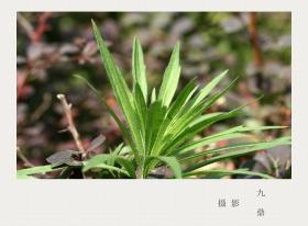 摄影  树 叶_图1-21