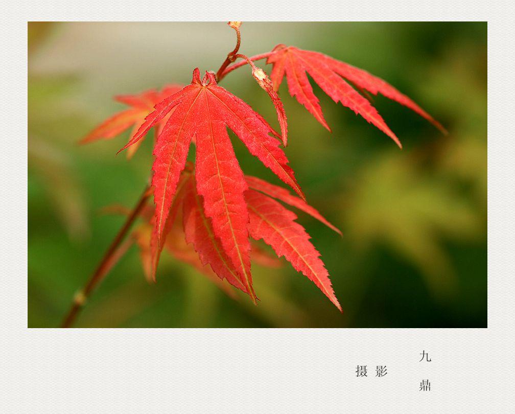 摄影  树叶 (二)_图1-1
