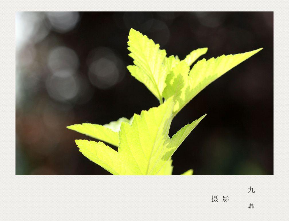 摄影  树叶 (二)_图1-2