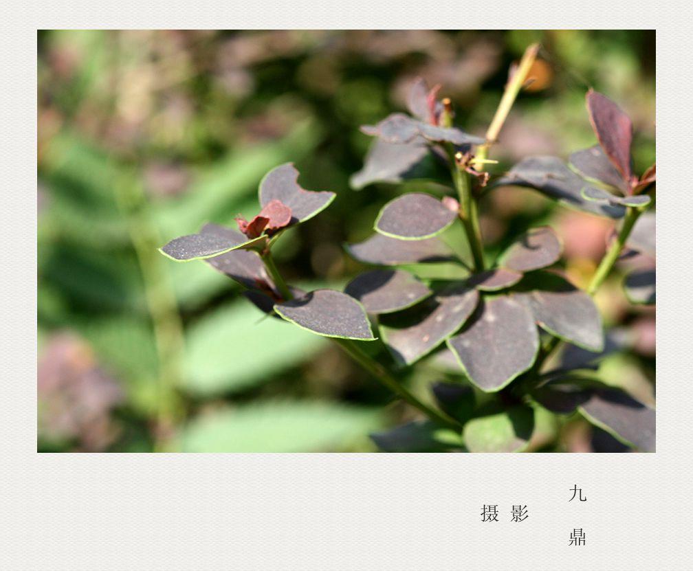 摄影  树叶 (二)_图1-3