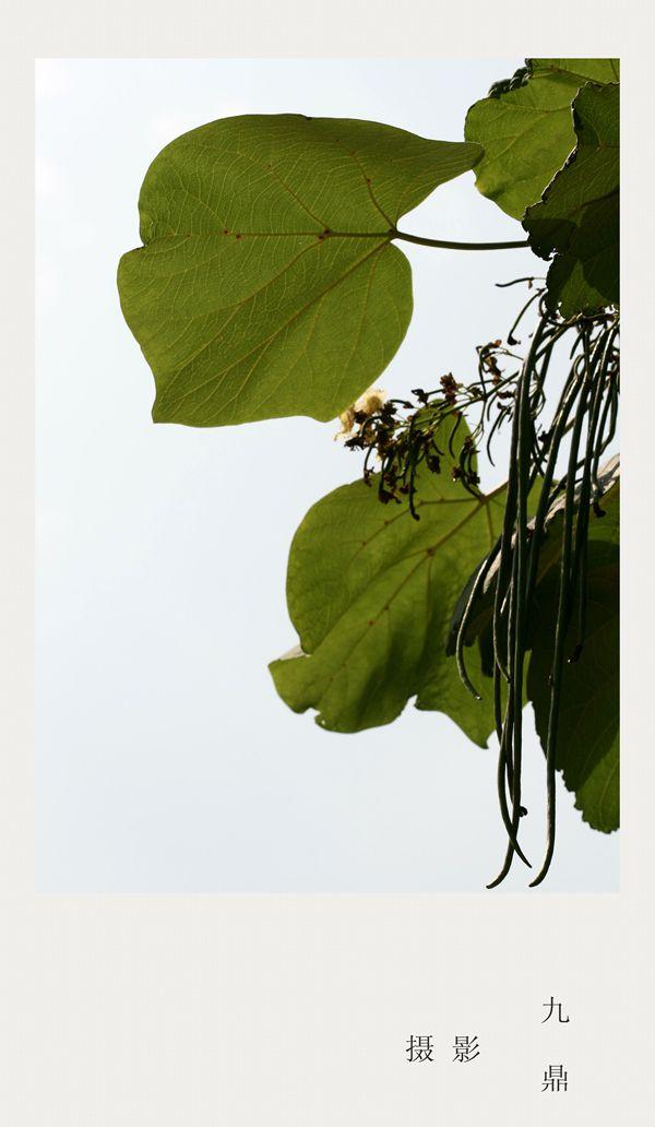 摄影  树叶 (二)_图1-4