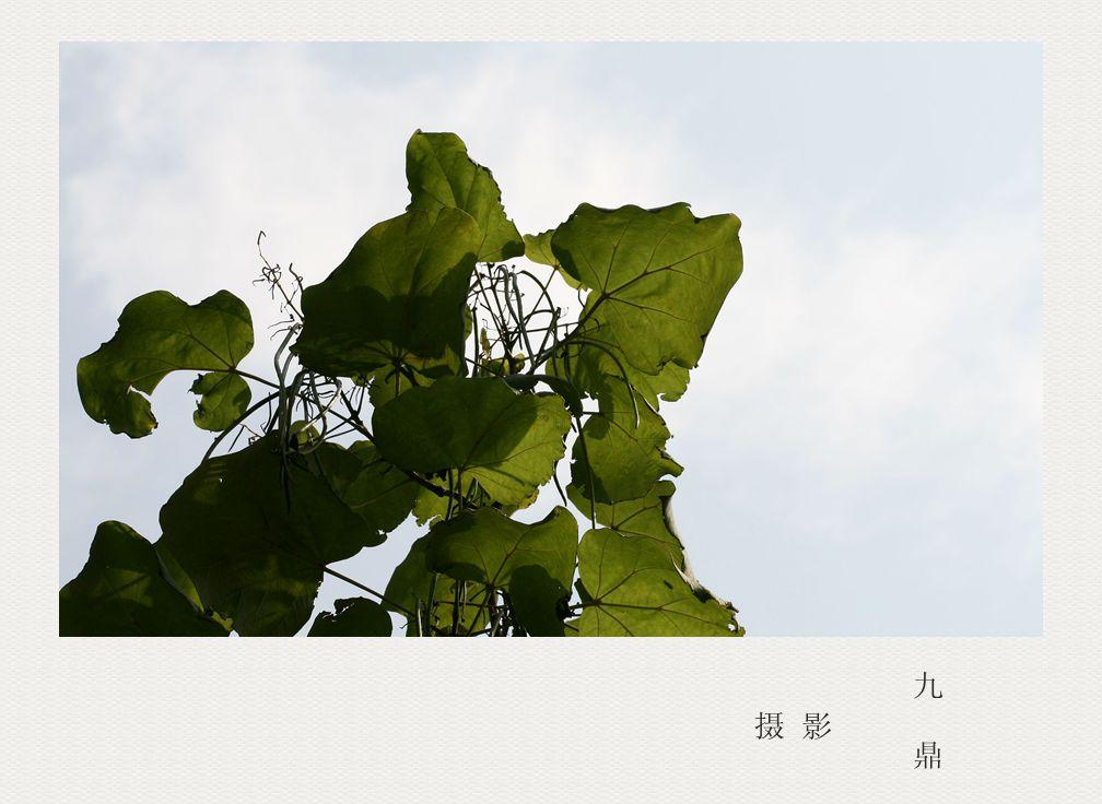摄影  树叶 (二)_图1-5