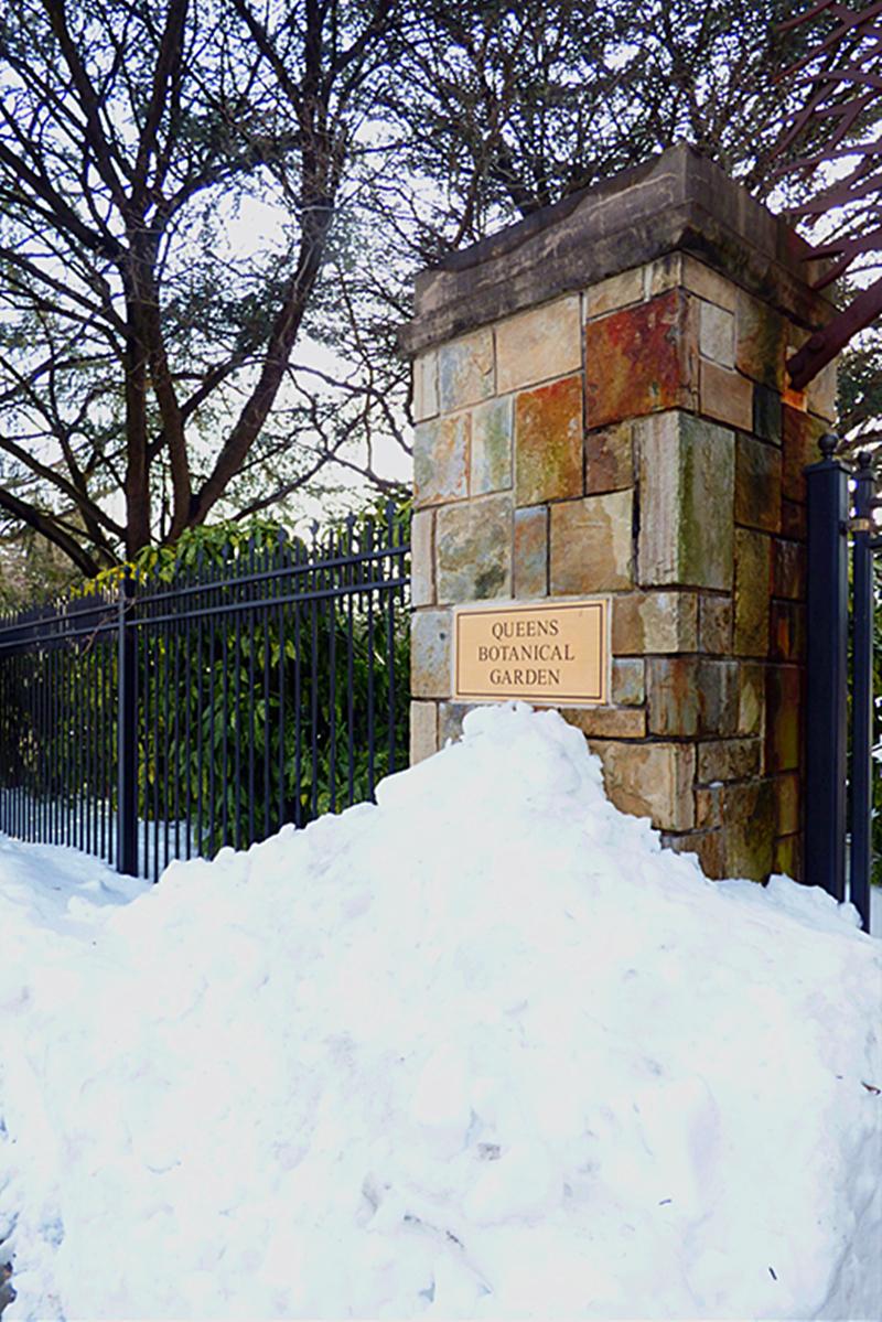 法拉盛植物园雪景_图1-1