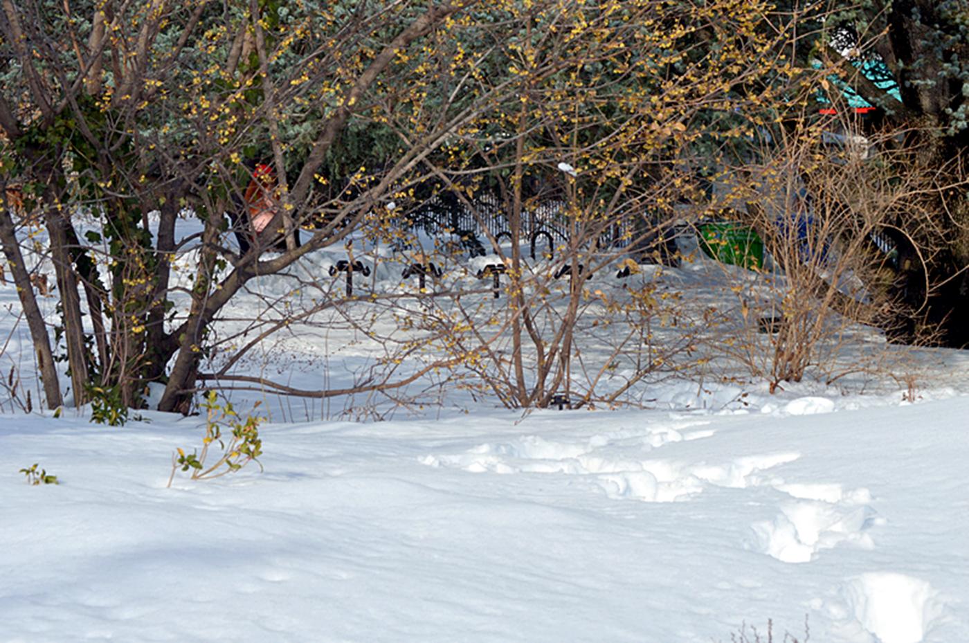 法拉盛植物园雪景_图1-4