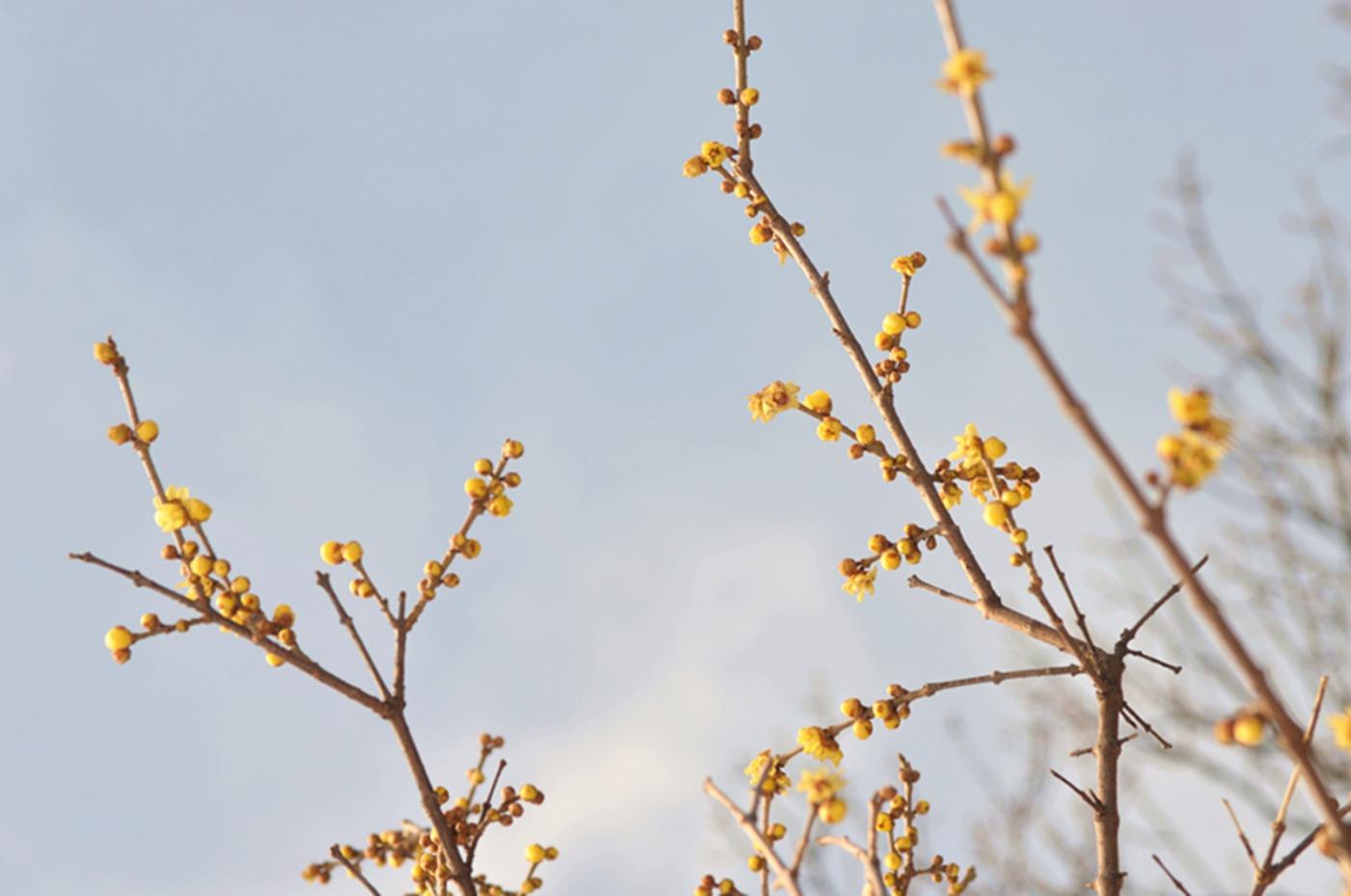 法拉盛植物园雪景_图1-5
