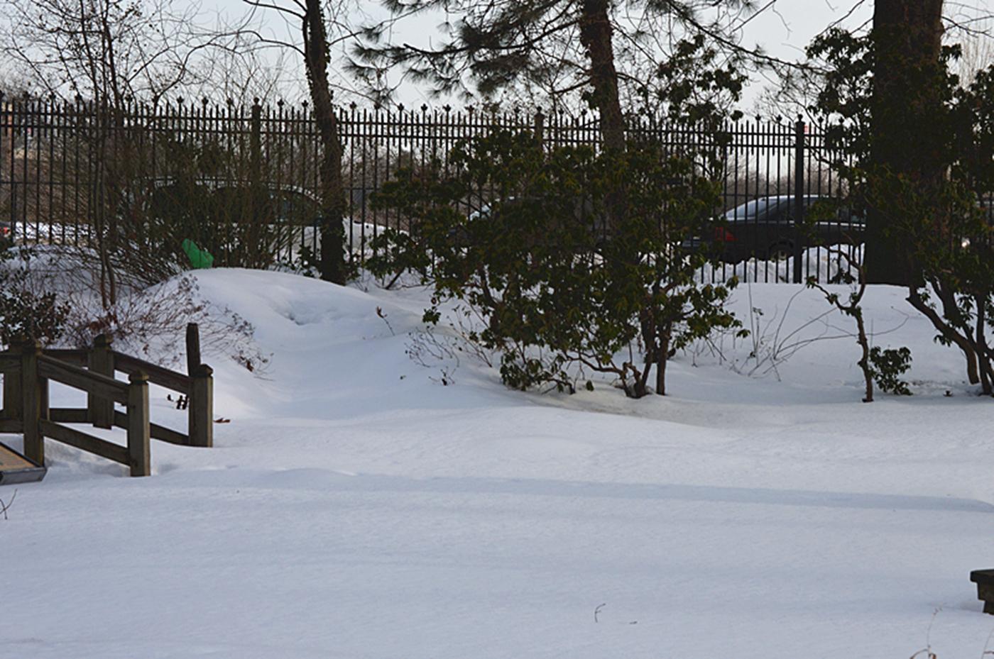 法拉盛植物园雪景_图1-7