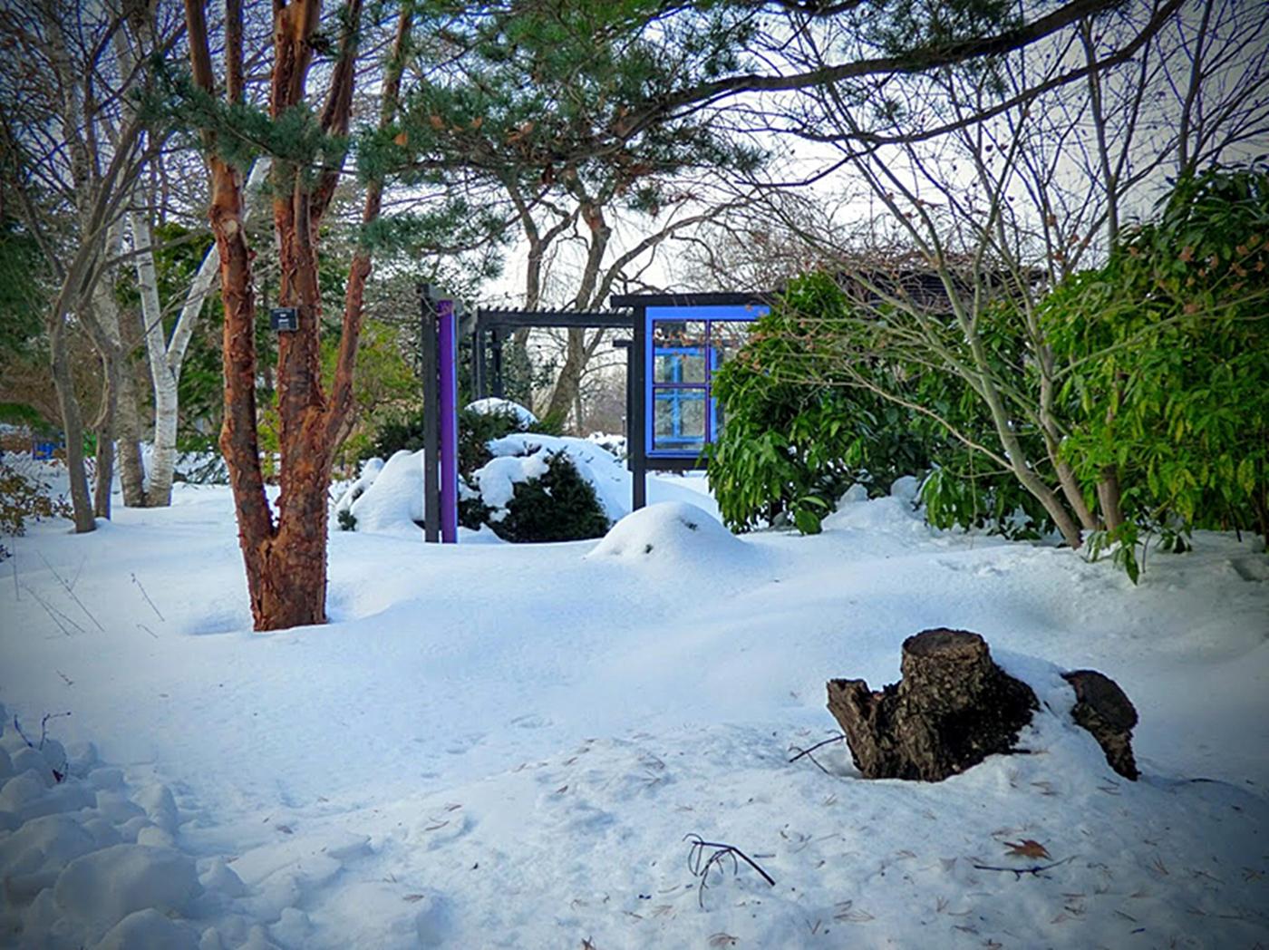 法拉盛植物园雪景_图1-9