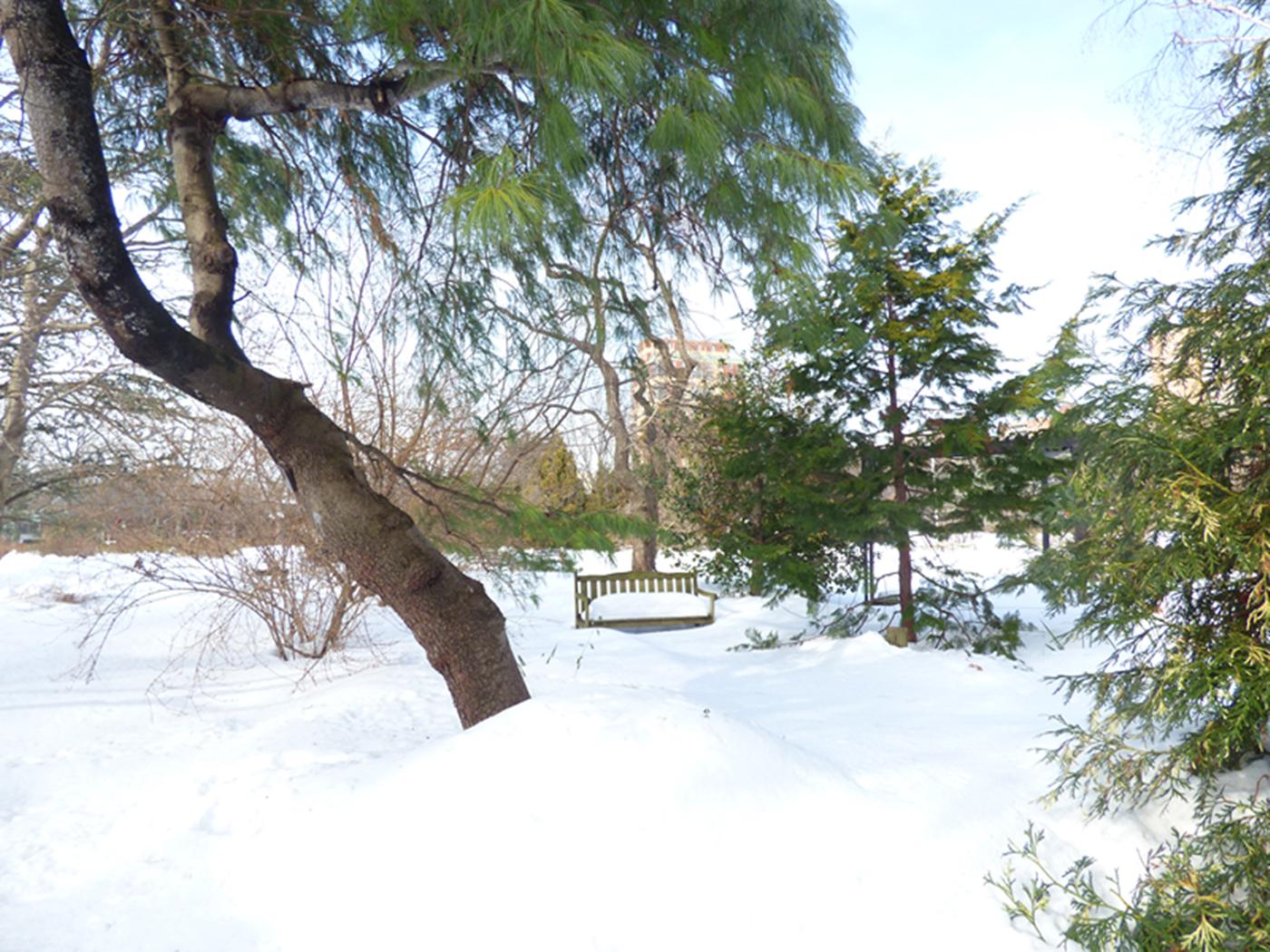 法拉盛植物园雪景_图1-17