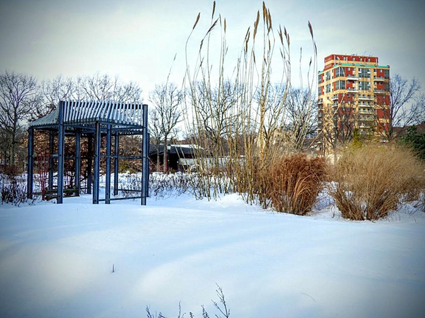 法拉盛植物园雪景_图1-16
