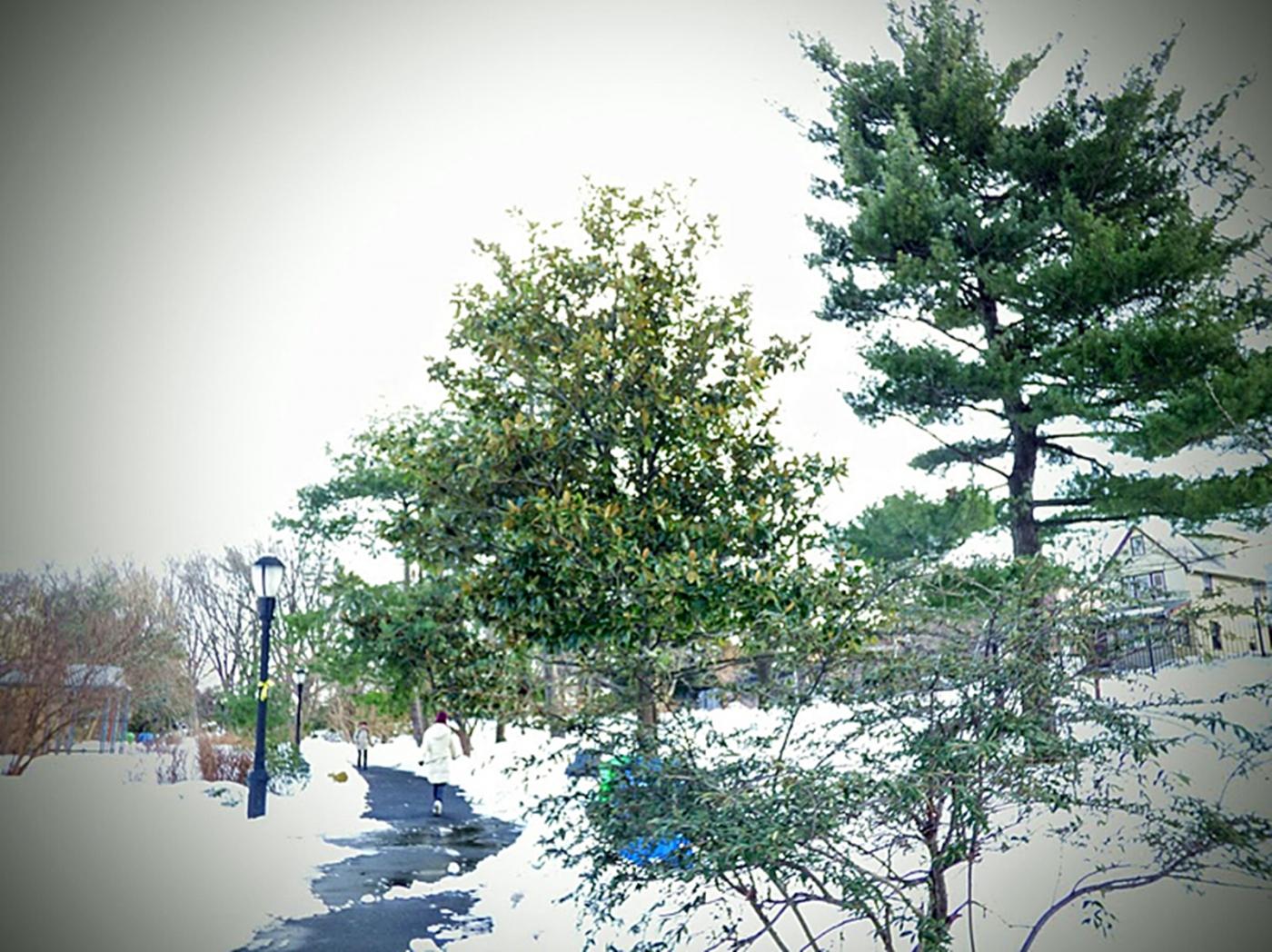法拉盛植物园雪景_图1-13