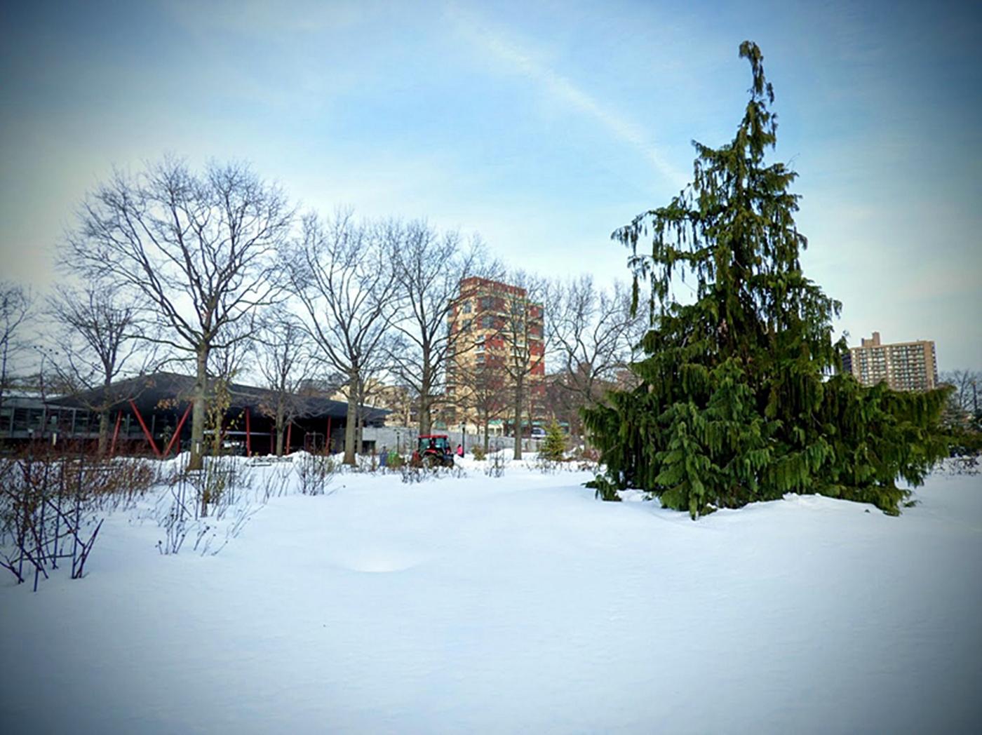 法拉盛植物园雪景_图1-12