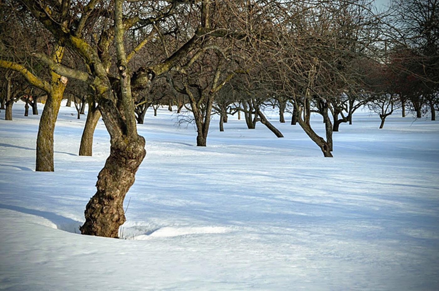 法拉盛植物园雪景_图1-19