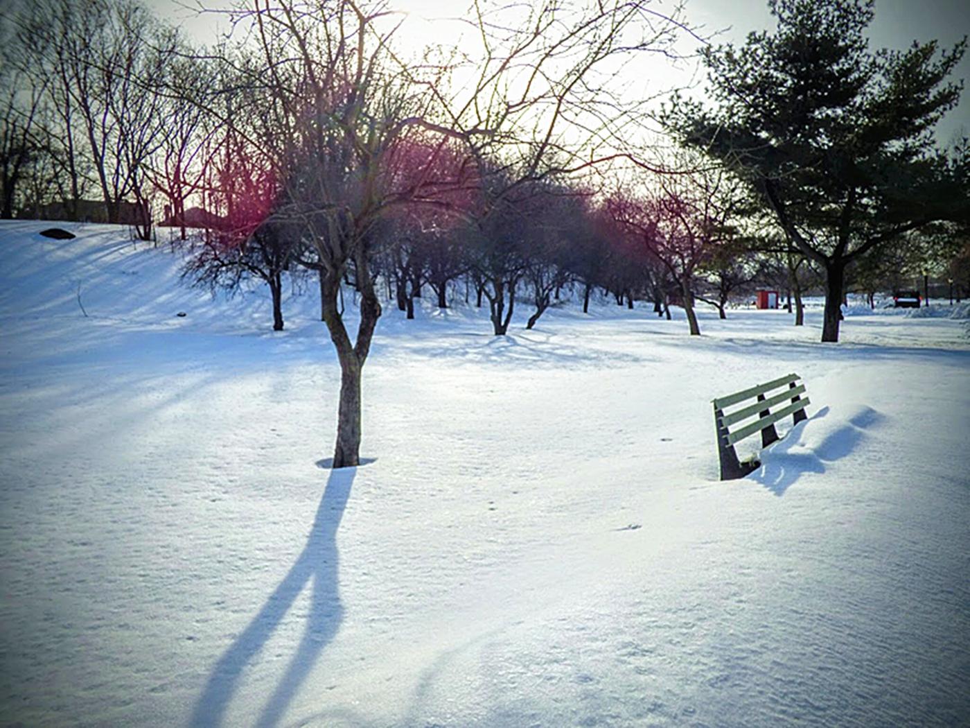 法拉盛植物园雪景_图1-18