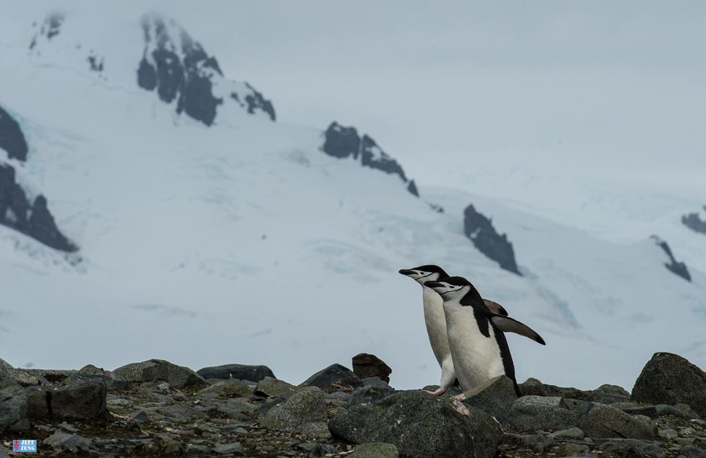 世界这么大 我偏爱南极【企鹅篇】_图1-4