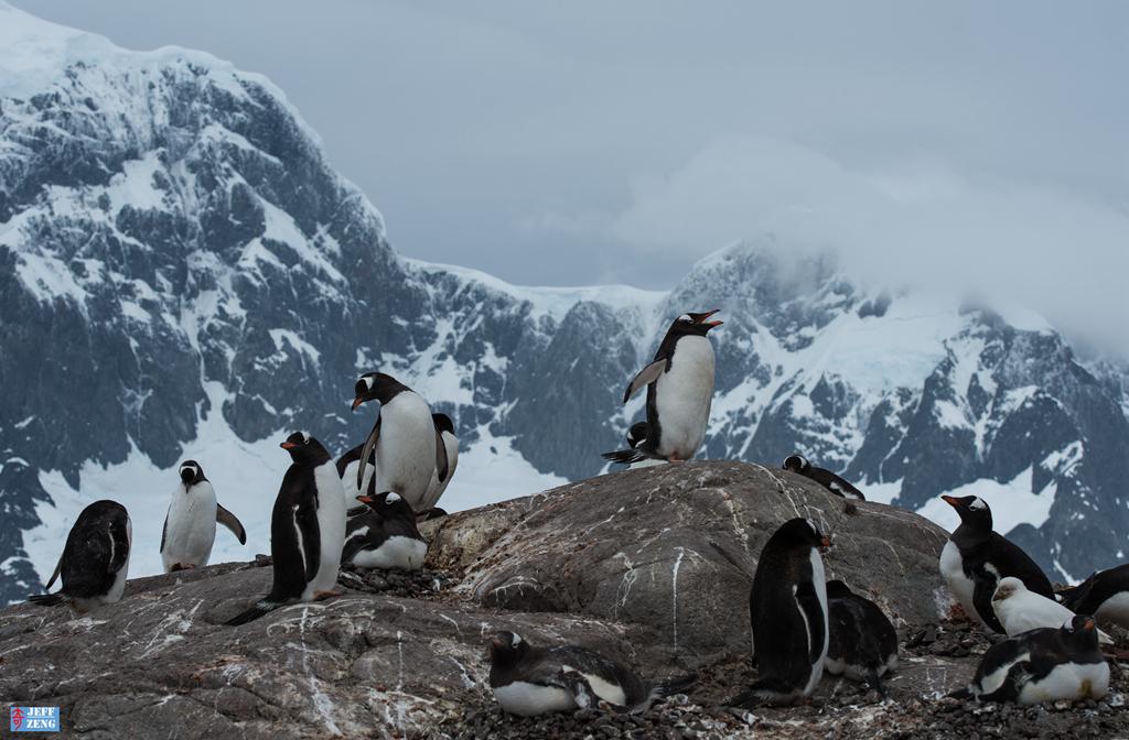 世界这么大 我偏爱南极【企鹅篇】_图1-5