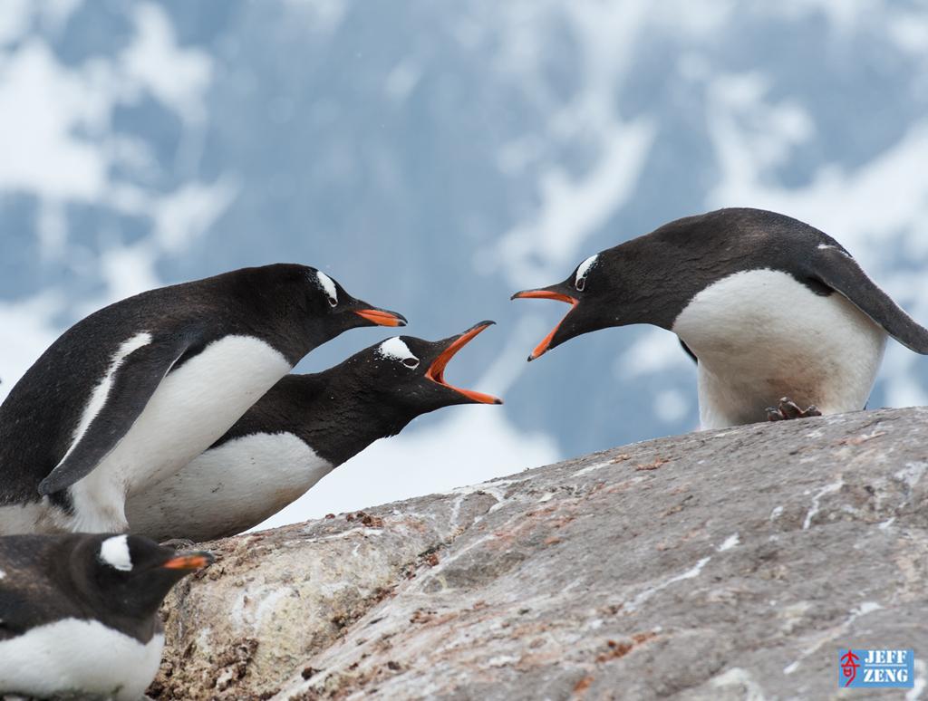 世界这么大 我偏爱南极【企鹅篇】_图1-3