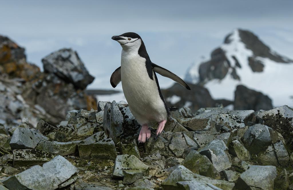 世界这么大 我偏爱南极【企鹅篇】_图1-6