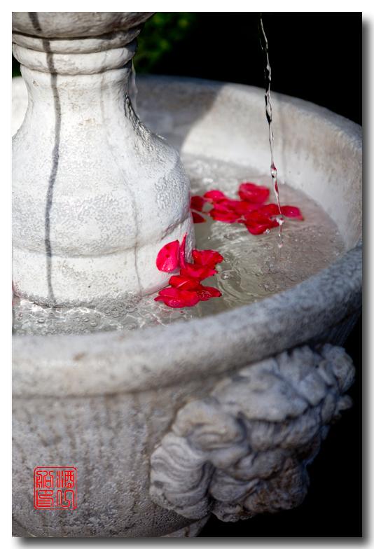 《酒一船摄影》:山茶花的故事_图1-16