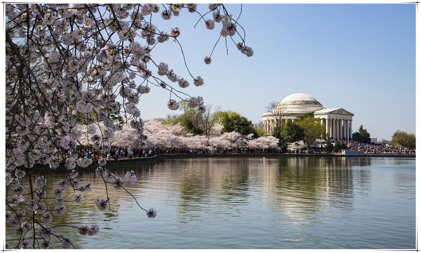 华盛顿樱花節_图1-10