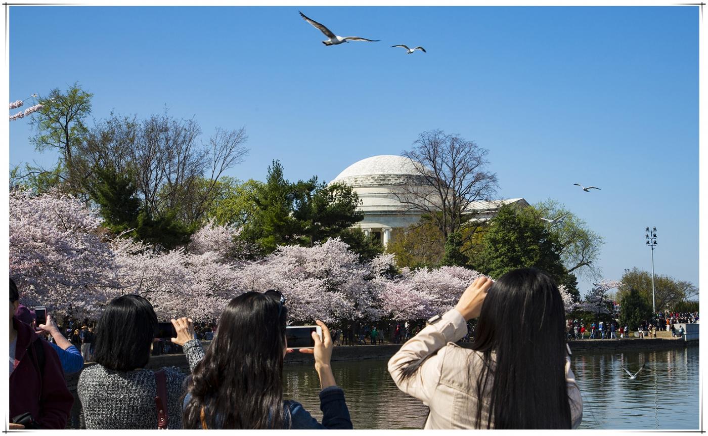 华盛顿樱花節_图1-11