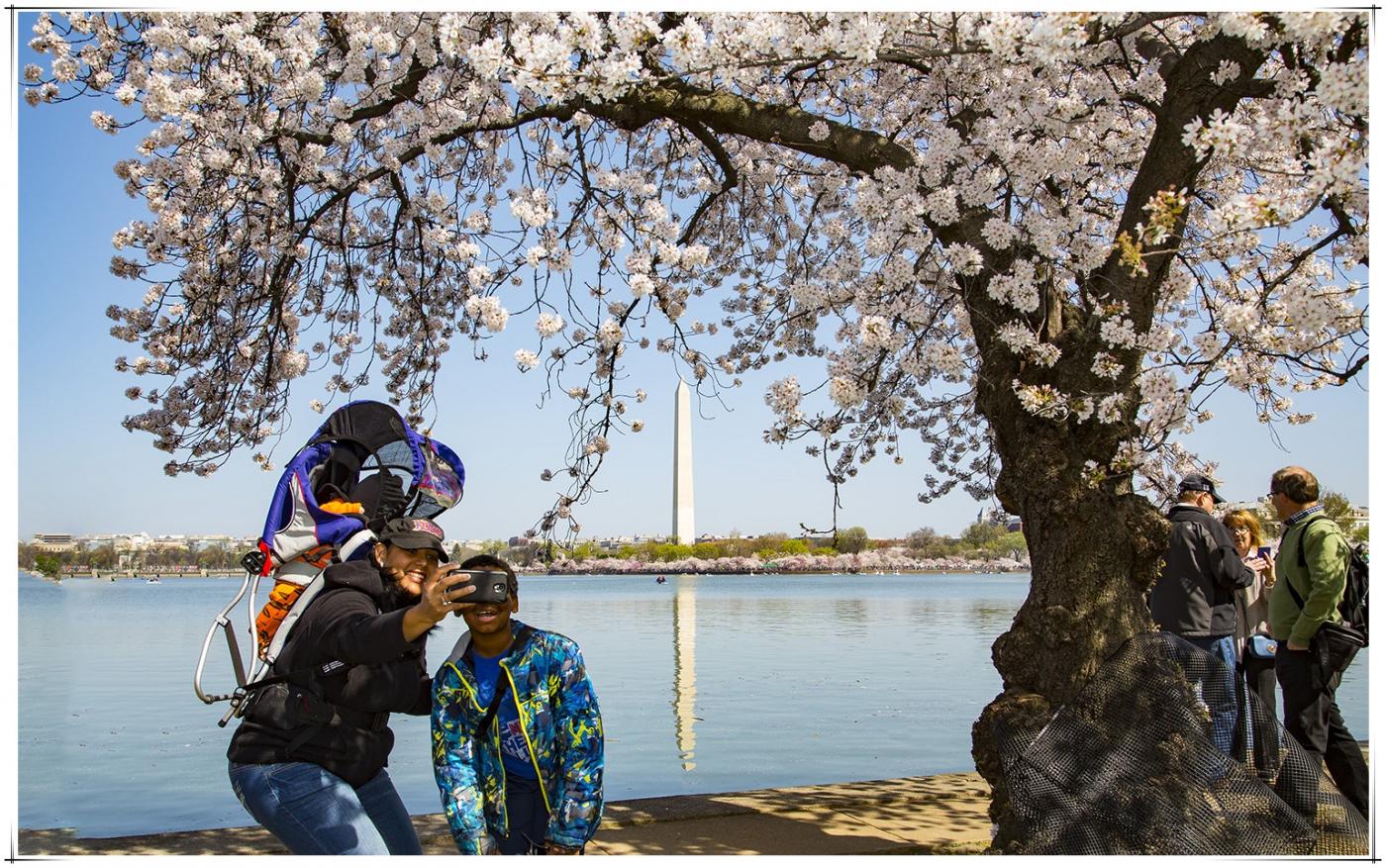 华盛顿樱花節_图1-12