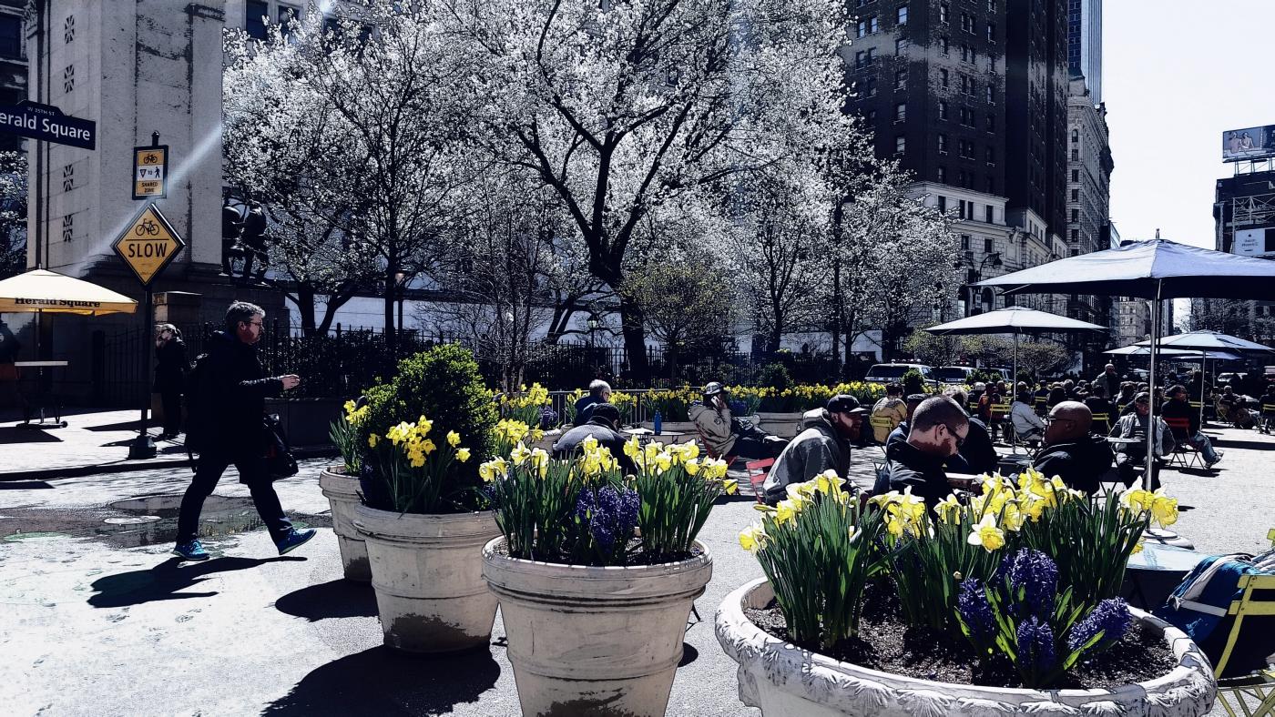【田螺随拍】纽约的春色