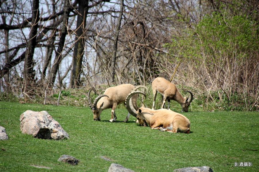 紐約市布朗士動物園半日遊  野
