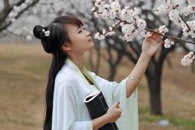 春风一夜杏花开  时空穿越佳人来