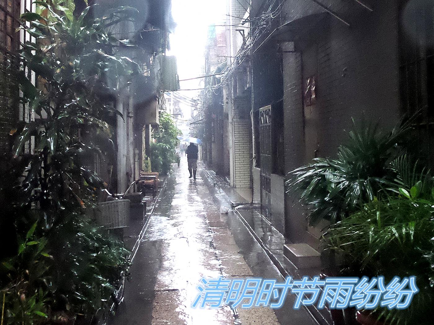 【四格照片】清明时节雨纷纷_图1-1