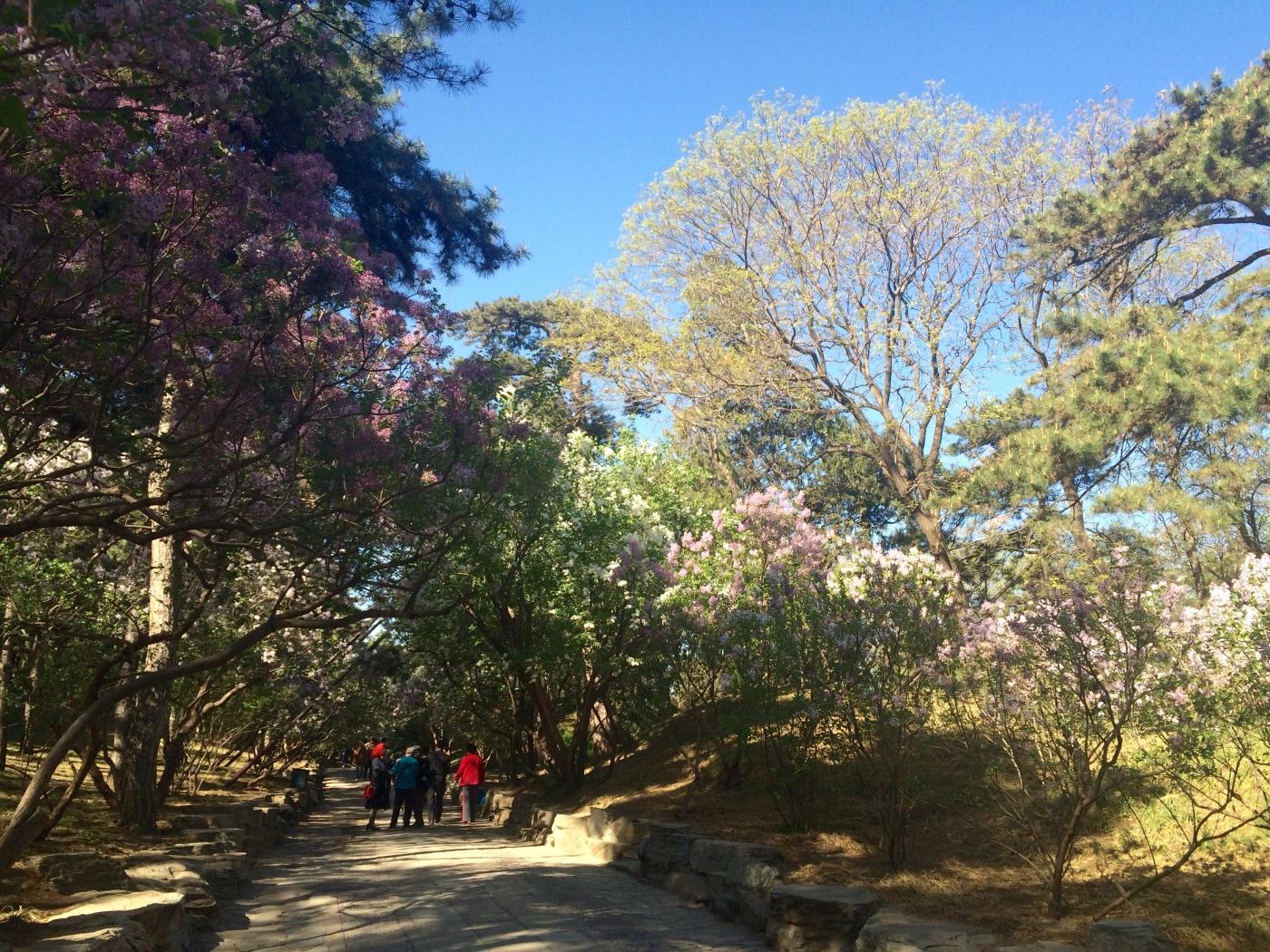 走在花开的路上(手机拍摄)_图1-5