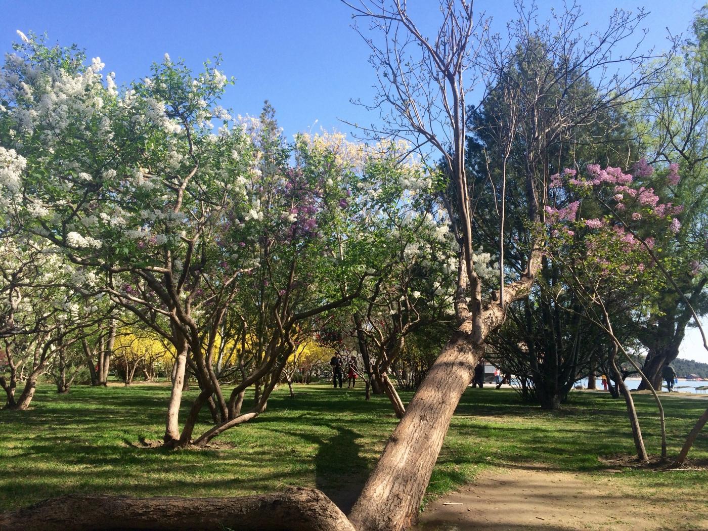 走在花开的路上(手机拍摄)_图1-4