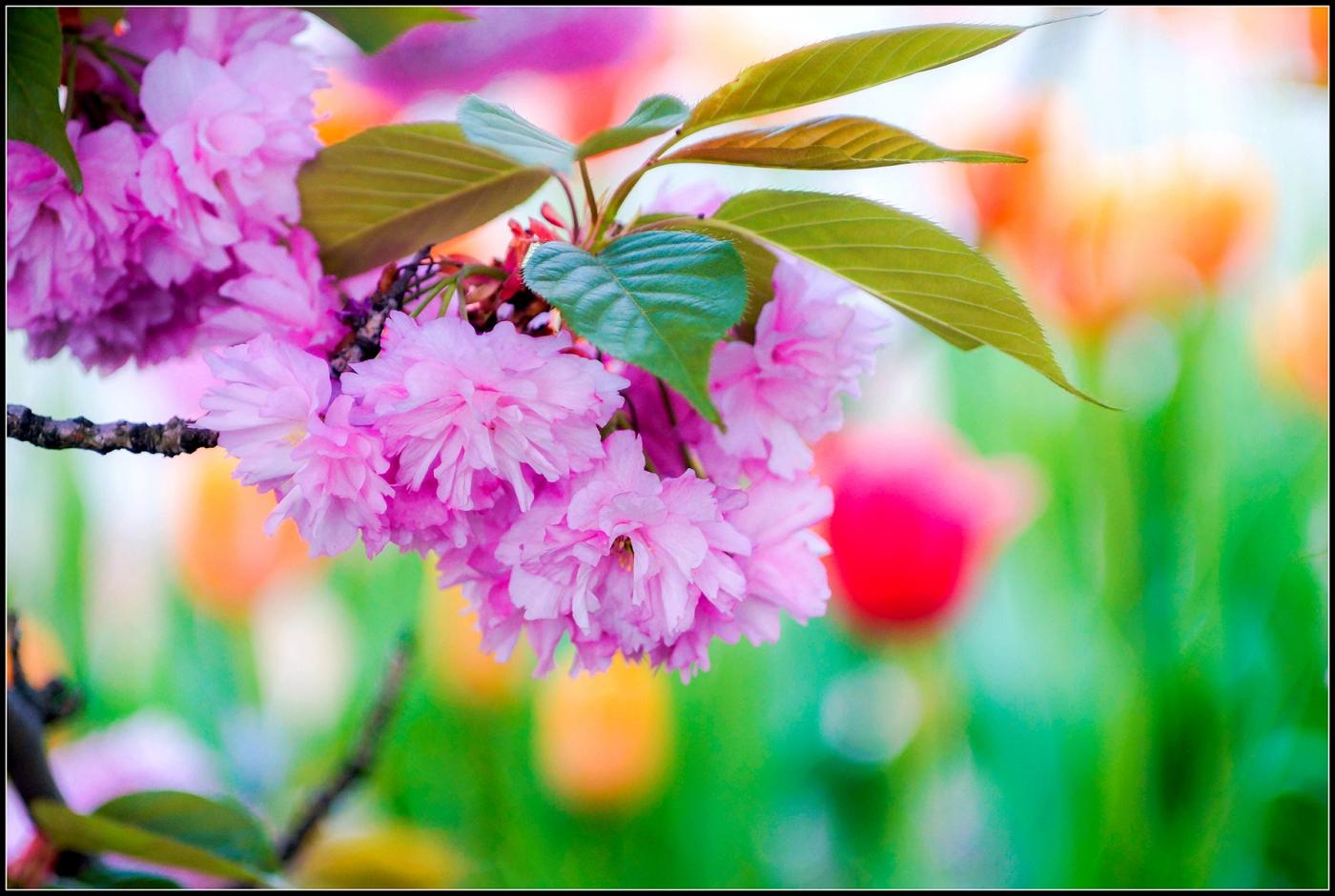春天的色彩_图1-2