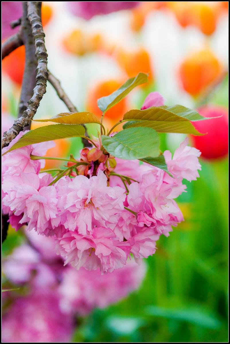 春天的色彩_图1-3