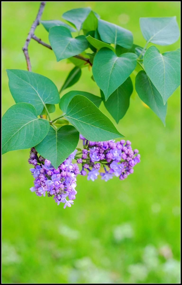 春天的色彩_图1-5