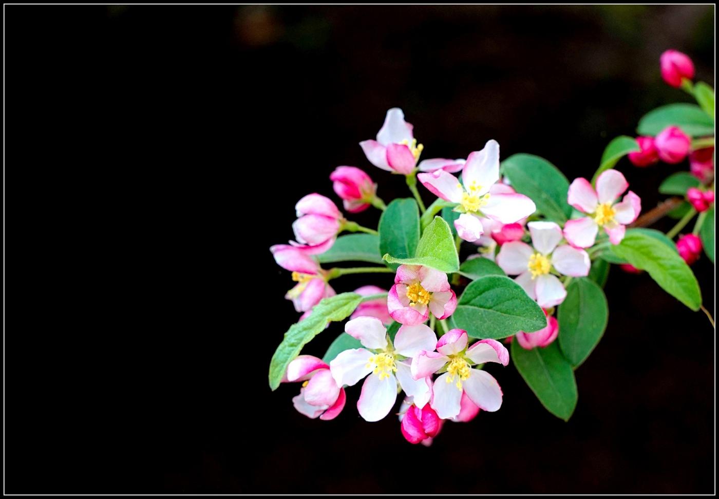 春天的色彩_图1-4