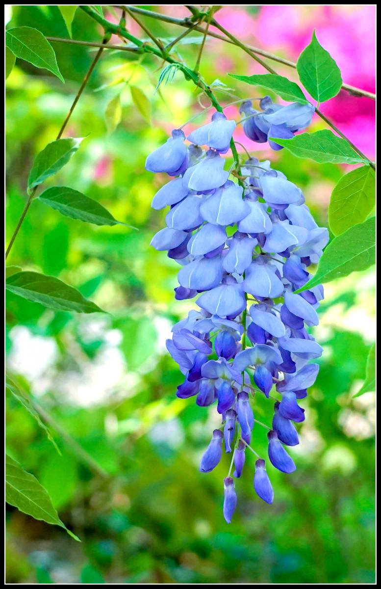 春天的色彩_图1-8
