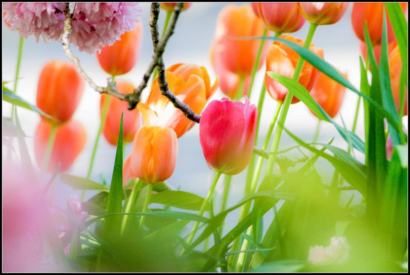 春天的色彩_图1-19