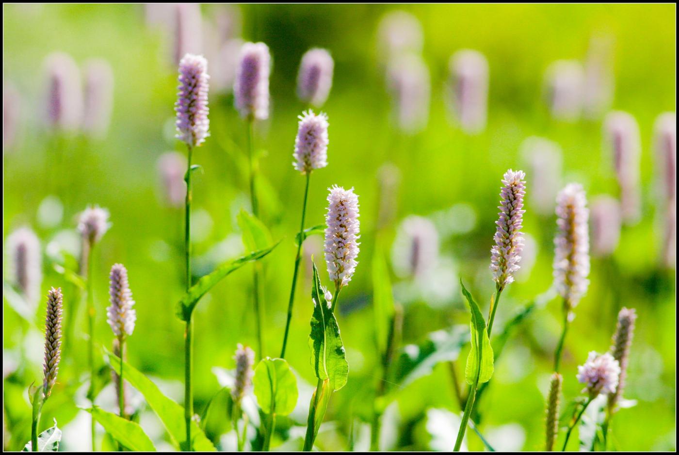 春天的色彩_图1-18