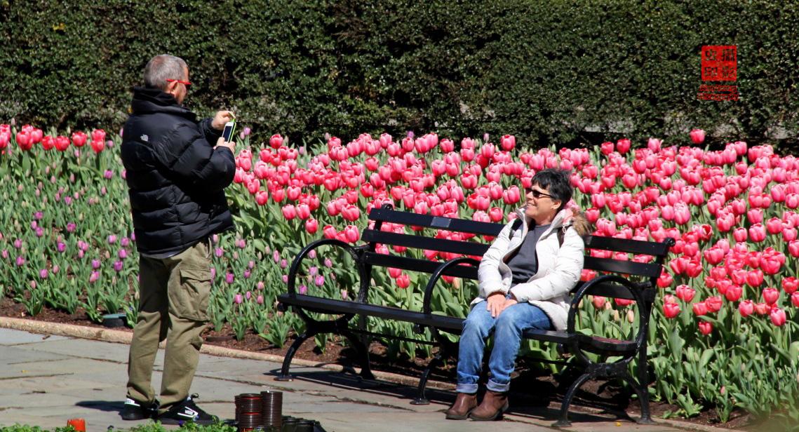 【攝影蟲】春到紐約中央公園_图1-3