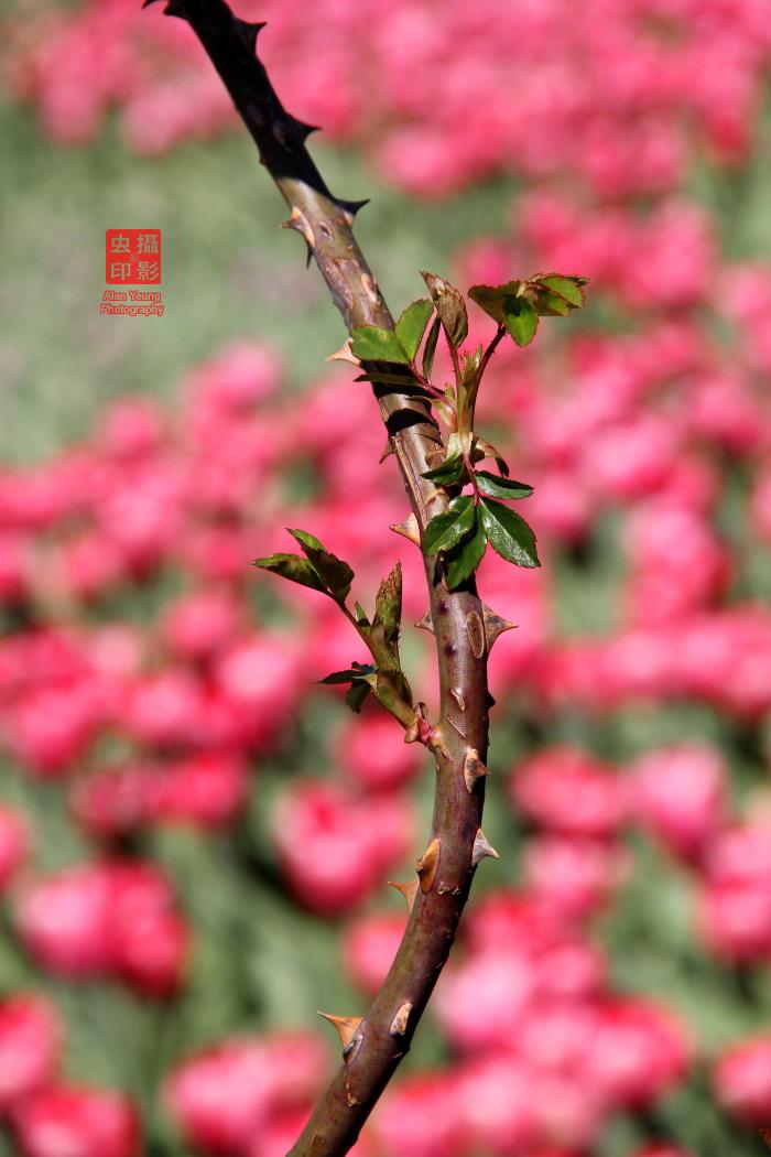 【攝影蟲】春到紐約中央公園_图1-10