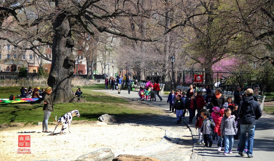 【攝影蟲】春到紐約中央公園_图1-5