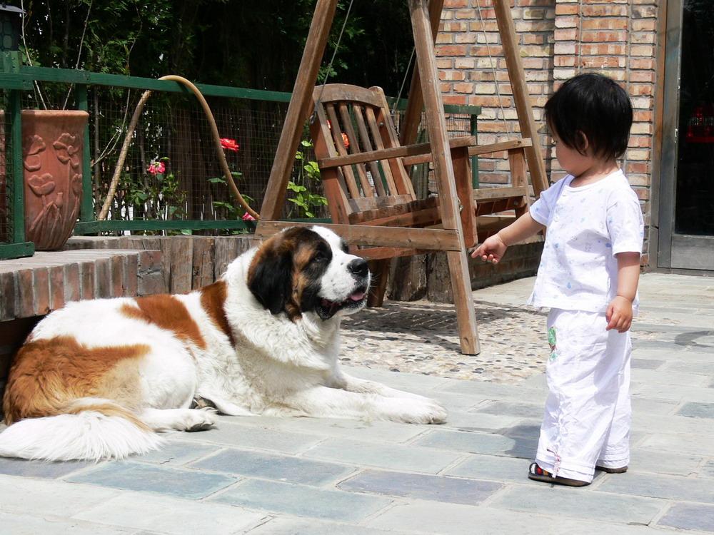 伴侣:你要的不是一条狗_图1-1