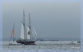 纽约帆船表演赛        【一片叶】
