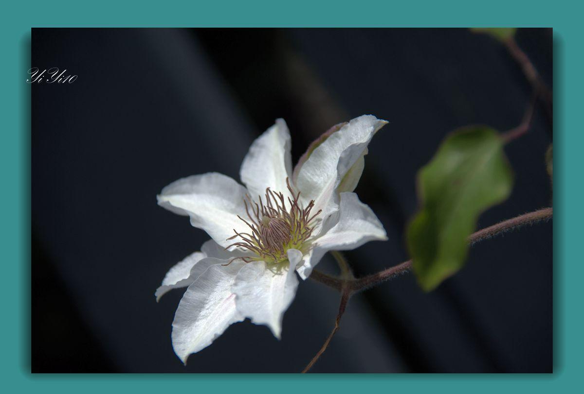 【原创】五月的花(摄影)_图1-4