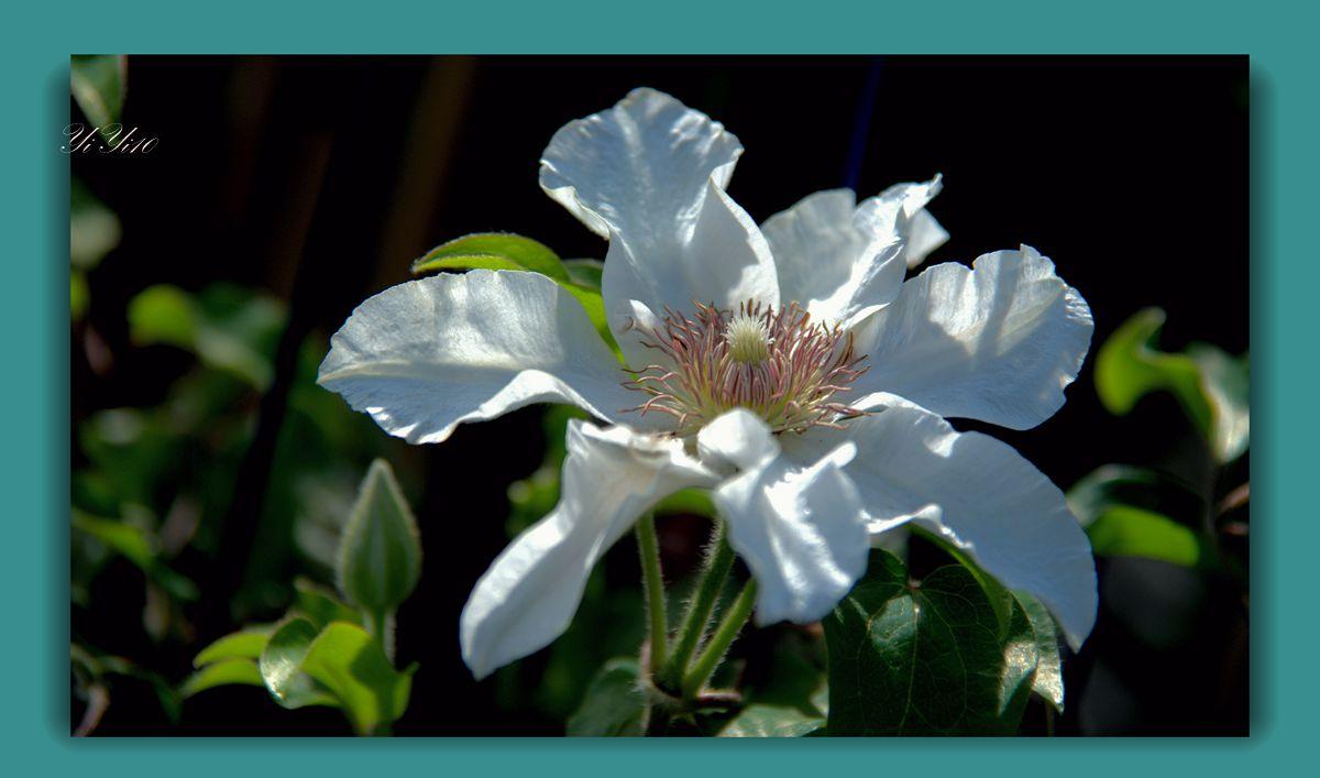 【原创】五月的花(摄影)_图1-8