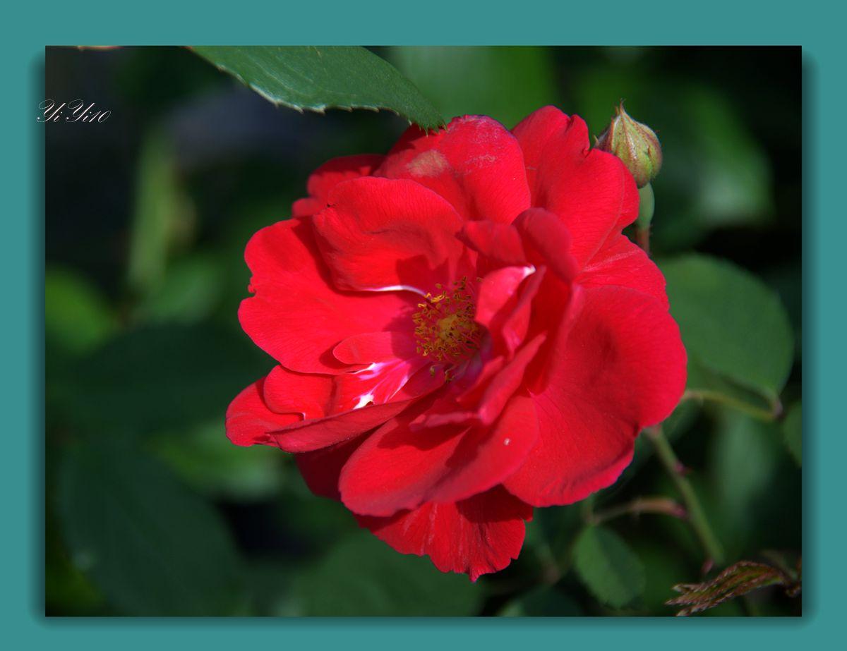 【原创】五月的花(摄影)_图1-2