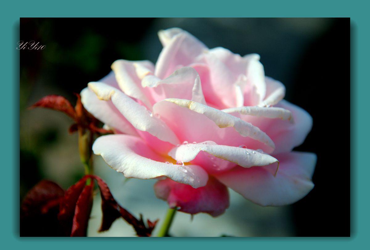 【原创】五月的花(摄影)_图1-1