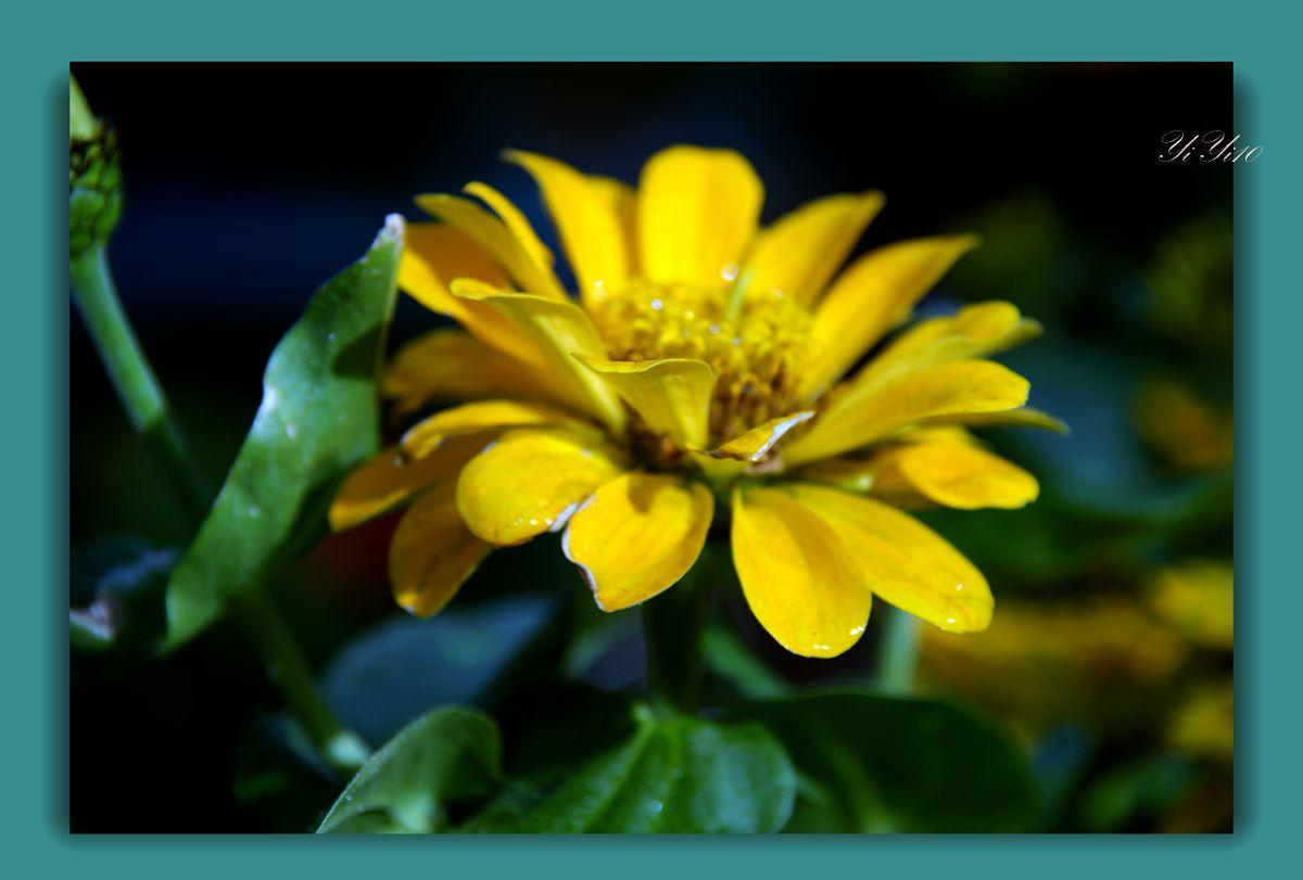 【原创】五月的花(摄影)_图1-5