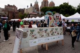 第一次看见台湾美食节(纽约联合广场)1605