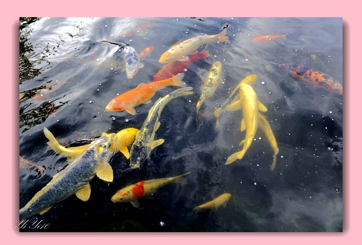 【原创】鱼池与喷水器(摄影)_图1-2